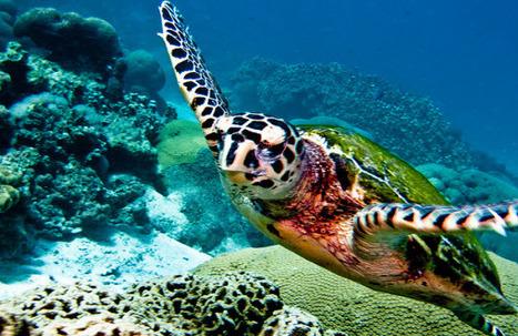 A Diver's Guide to Thailand | AUSTIN MEDIA SLINGERS: WEB-SOCIAL MEDIA-ECOMMERCE-SEO | Scoop.it