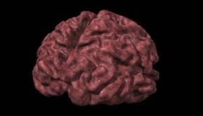 Alzheimer: una variante del gen Apoe aumenta el riesgo de padecimiento en las mujeres | Alzheimer, para no olvidar | Scoop.it