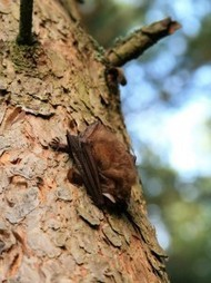 Mysterious new SARS-like coronavirus came from bats | Amazing Science | Scoop.it