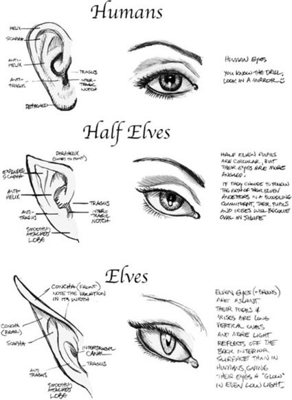 Ear Drawing Reference Guide | Circolo d'Arti | Scoop.it