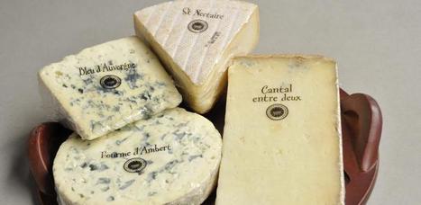 Lait AOP d'Auvergne : Les éleveurs veulent de meilleurs prix pour leurs fromages | The Voice of Cheese | Scoop.it