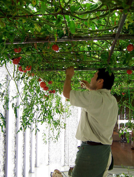 Pruned: The Subterranean Farms of Tokyo | Vertical Farm - Food Factory | Scoop.it
