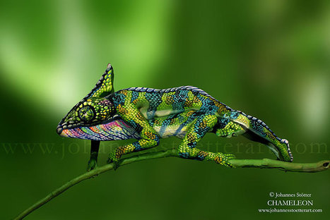 Johannes Stötter Nature-Art | Creatives at Home on the Internet | Scoop.it