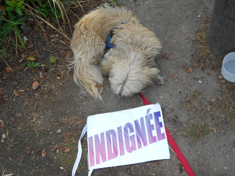 19 avril Argenteuil | # Uzac chien  indigné | Scoop.it