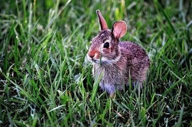 Apareamiento conejos reproduccion asexual de las plantas