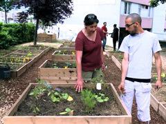 Compost au pied des immeubles jardins partagés page scoop