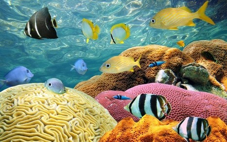 Our oceans are threatened by a toxic tide   Ocean News   Scoop.it