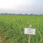 Focus on Bangladesh's feat | A Better Food System | Scoop.it