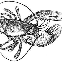 Lobster: A New Open Source Cross Platform Game Programming ... | KI Classroom Resources | Scoop.it