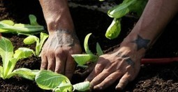 """Innovation of the Week: Gardening """"Boot Camps"""" for Troubled Youth 