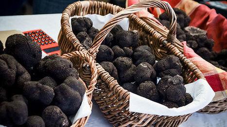 Académie culinaire du foie gras et de la truffe à Sarlat – France Bleu | Agriculture en Dordogne | Scoop.it