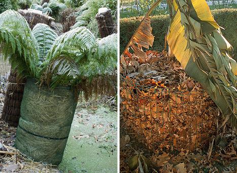 Protection antigel en pleine terre : un manchon | jardins et développement durable | Scoop.it