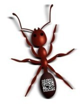 QR codes help University researchers to understand ants | qrbarna | Scoop.it