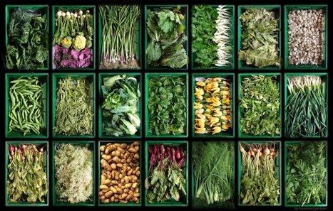 Une étude scientifique conclut aux effets bénéfiques globaux de l'agriculture biologique | Vertical Farm - Food Factory | Scoop.it